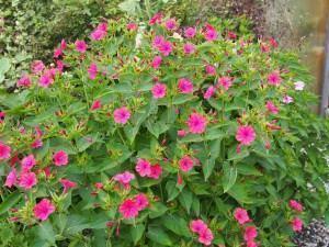 Plantas de pequeno porte para embelezar os muros do jardim!