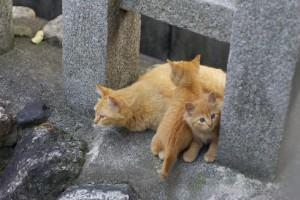 anticoncepcionais em gatas