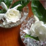 Flores para Decorar a sua Mesa