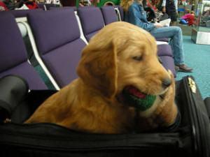Viagem de avião com cachorro