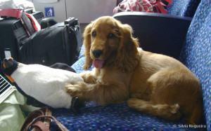 Como viajar de avião com seu cão