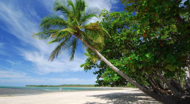 Plantas para Lugares de Praia