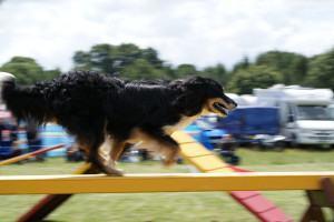 Cachorro ativo e saudável