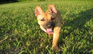 Cães sem pedigree tem o mesmo amor!