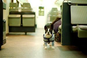 como viajar com o cão