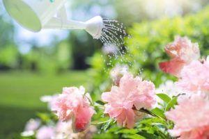Cuidados com o Jardim no Final do Verão
