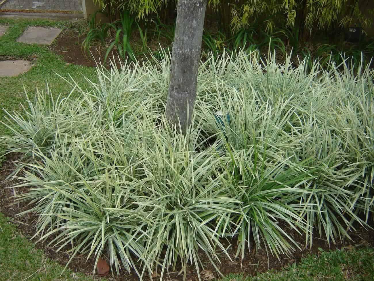 plantas bordaduras jardimComo Fazer Um Jardim Com Flores