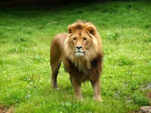 Carnê leão – Legalize seus ganhos como profissional liberal