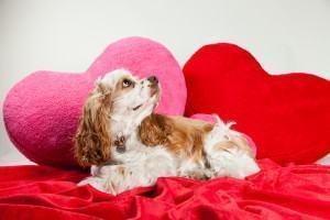 Como prevenir seu cão contra o Verme do Coração (Dirofilariose Canina)