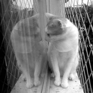Gatos adoram janelas