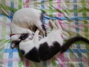 Gatos felizes