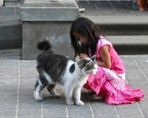 socialize o gato