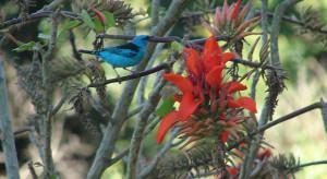 Plantas no jardim para alimentar os pássaros