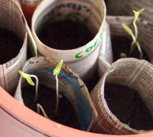 mudas de hortaliças a partir de sementes