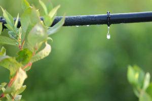 Dicas para Irrigação da Horta Caseira