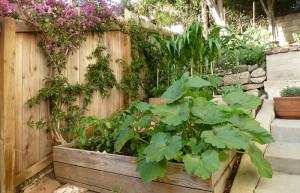 Wicking Beds: Horta em Caixotes para Pequenos Espaços