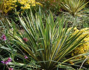 plantas de pouca água