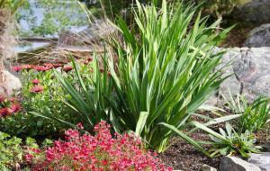 Projetos para Jardins Rochosos