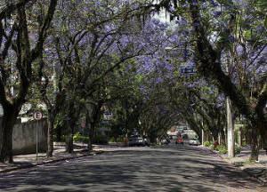 árvores na calçada