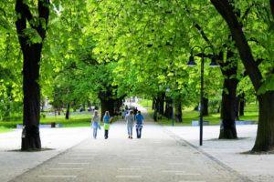 Árvores de Sombra para Calçadas