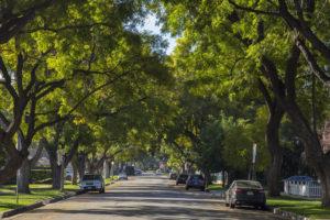 Sugestões de Árvores ou Arbustos para Calçadas