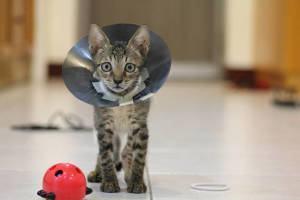 Doenças Graves Comuns aos Gatos