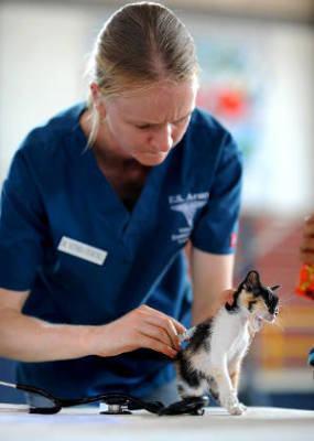 veterinária gato