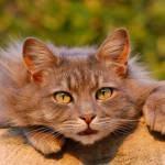 Pequenos Problemas de Saúde dos Gatos
