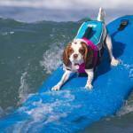 Proteja seu Cachorro no Verão