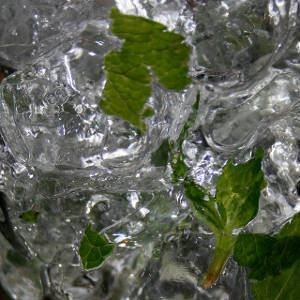 hortelã congelado