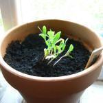 Cultive Ervas para Tratar Pequenas Feridas