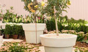 Como Acabar com Mosquitos nos Vasos e Jardins