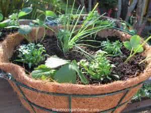 cesta coqueiro ervas
