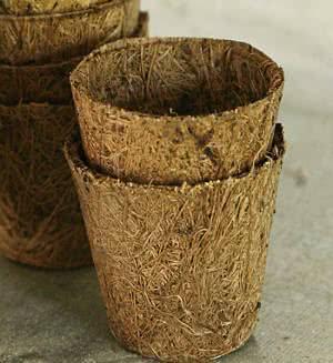 vaso coqueiro