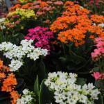 Como Escolher uma Planta para Dar de Presente