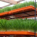 Diferentes Sistemas para Montar um Cultivo Hidropônico