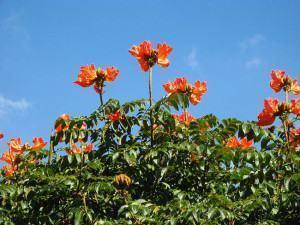 Plantas que Florescem no Outono
