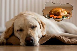 Alimentação Caseira para Cães: Guia Básico