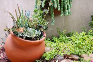 Plantas Suculentas em Arranjos de Vaso ou Jardim