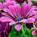 Fungicidas Naturais para Plantas Ornamentais