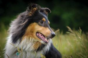 Como Regular o Funcionamento Intestinal dos Cães