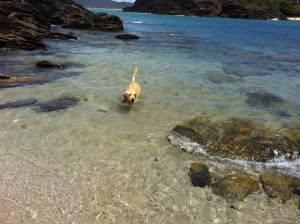 labrador mar
