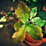 Doenças de Plantas em Vaso: Como Cuidar