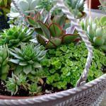 Como Comprar Plantas Saudáveis