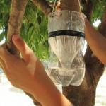 Armadilha caseira para exterminar mosquitos!