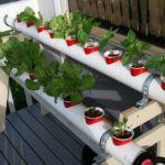 Horta Doméstica Hidropônica: Como Fazer