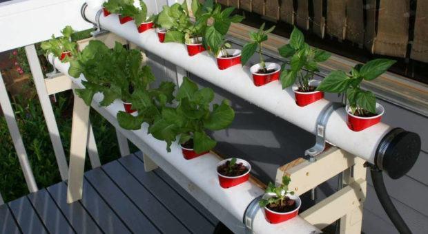 Como Fazer Cultivo Hidropônico em Casa: Hidroponia Caseira