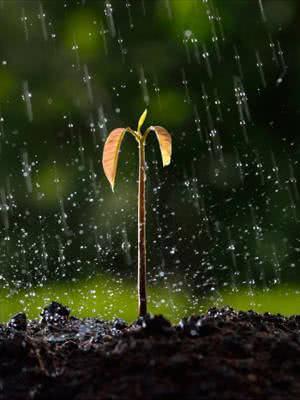 planta broto chuva