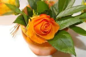 rosa-vaso