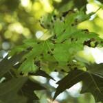 Plantas com Fungos: Como Tratar